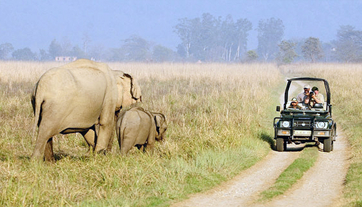 Corbett Luxury Tour